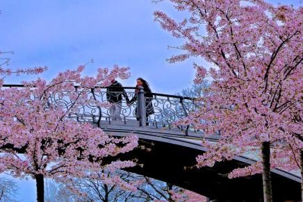 Forår på Toldboden