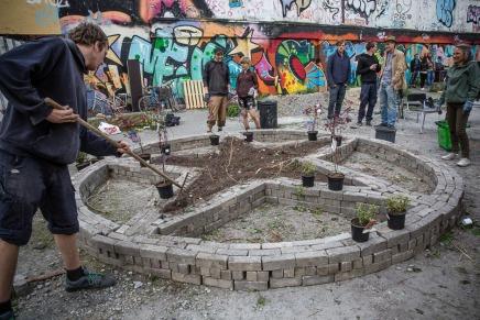 50 unge mennesker har skabt en blomstrende byhave på Jagtvej69