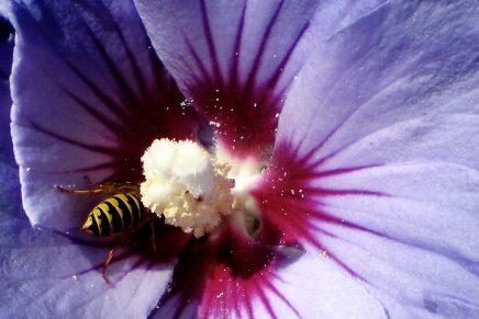 Bien og blomsten i Tisvildesammenleje