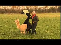 Kaos midt i interview: Lama ville parresig