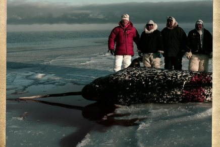 Henrik Saxgren rejsebreve fraGrønland