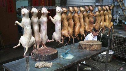 Hundekødssælger om kontroversiel festival: Jeg vil bare tjenepenge