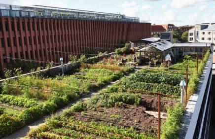 Stedsans er en ny restaurant på tagetØstergro